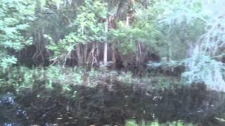 Myakka State Park David Barkasy