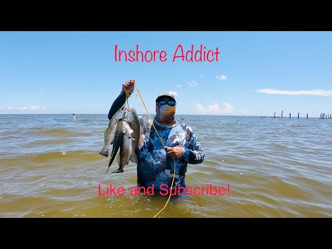 Live Mullet Is King In Port Mansfield Texas 4K