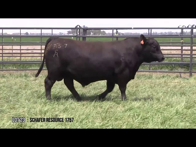 Mid Valley Bull Sale Lot 23