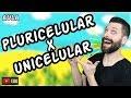 Organismos Unicelulares e Pluricelulares (Multicelulares) | Biologia com Samuel Cunha