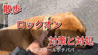 土佐ピット ケンちゃん主役 ◼◻◼◻◼◻◼◻◼◻◼◻◼◻◼◻◼◻◼◻◼◻◼◻ 犬の問題行動のご...
