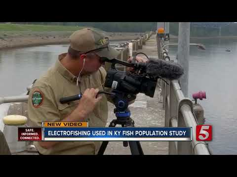 Ky. Wildlife Officers Use Electro-fishing Equipment To Shock Fish For Population Count