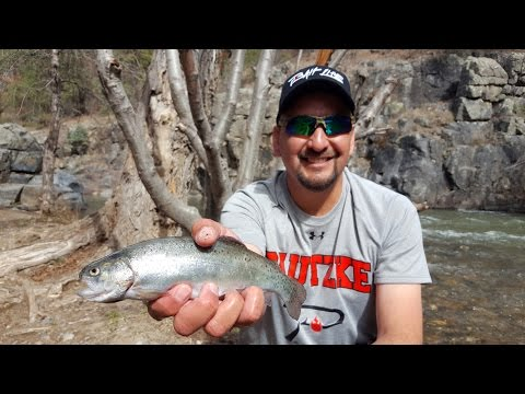 Trout Fishing New Mexico's Pecos River