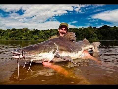 "Trailer for ""Crazy for Laulau"" (Piraiba fishing in Suriname)"