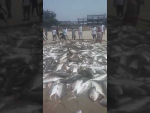 Live fish bust out in sierra Leone