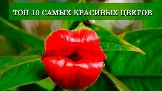 видео 10 самых красивых цветов в мире
