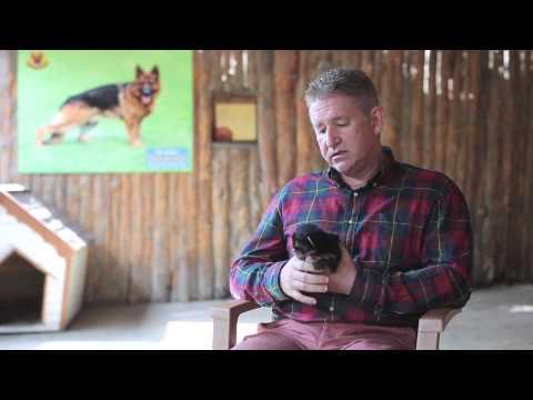 yorkshire-terrier-cinsi-köpekler-nasıl-eğitilir?