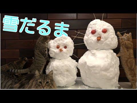 雪だるまで遊ぶ猫たち