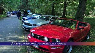 Yvelines | Près de 70 Mustangs rassemblées à La Verrière