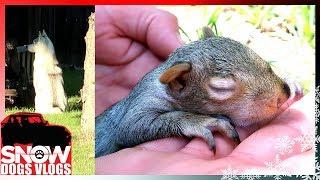 baby-squirrel-friend-rescue