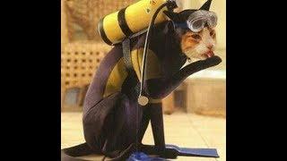 Кошки и котята лучшие моменты
