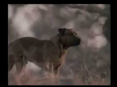 Jock of the Bushveld (1986)