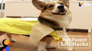 DIY Halloween Banana Dog Costume | The Dodo Pet Parent Hacks thumbnail