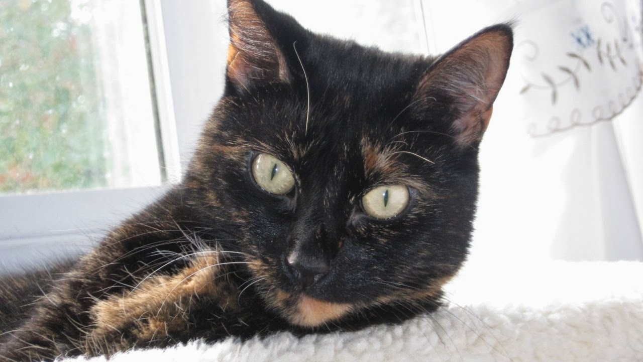 The Conscious Cat Live Stream
