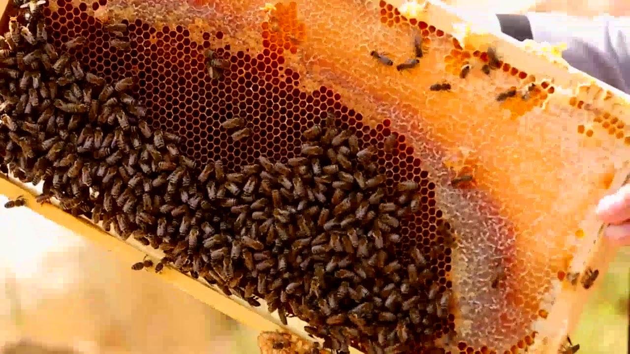 アンゼル 蜂蜜