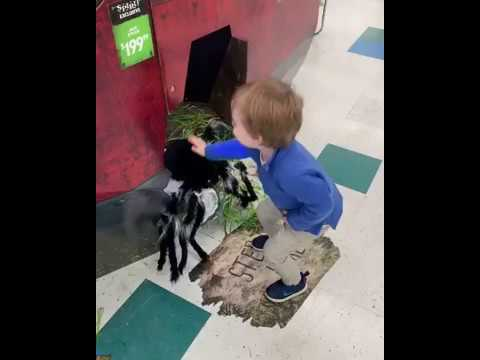Rick Woodell - Toddler to parent: Don't worry Dad, I'll kill the GIANT spider for you!