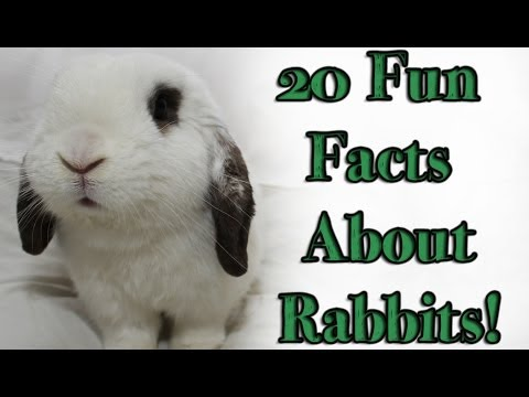 BudgetBunny: 20 Fun Facts About Rabbits