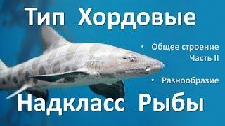 12.2 Рыбы часть II (7 класс) - биология, подготовка к ЕГЭ и ОГЭ 2018