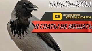 Сколько спят врановые птицы? | Ответы и Советы | БСВPlus