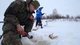 Носим рыбу ведрами Рыбалка на севере Косим окуня как можем