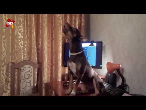 Собака исполнила романс Молитва из фильма Мусорщик