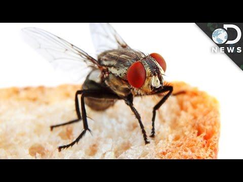 ¿Qué pasa cuando una mosca se para en tu comida