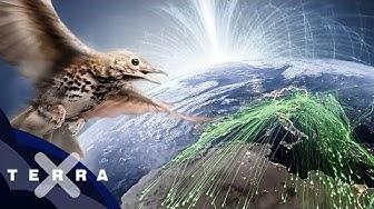 Der geheime Trick der Zugvögel