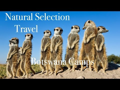 Natural Selection Travel -  Camps of Botswana.
