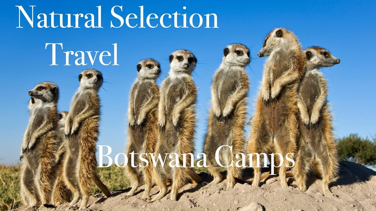 Natural Selection Travel - Camps of Botswana  - Wild Images