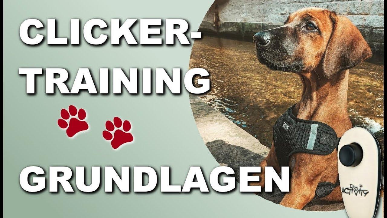 DOGSLINE Profi Clicker mit Spiralarmband f/ür Clickertraining Hundeschulen Premium Klicker