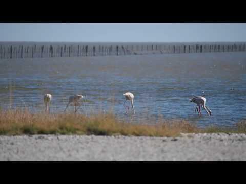 P5190007   Flamingos, bij Kukonje Island