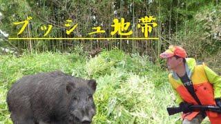 芽竹ヤブでワンコらがイノシシを起こす・・・かなり撃ちづらい状況 イノ...