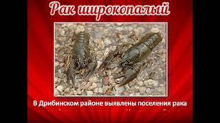 Красная книга Дрибинского района буктрейлер