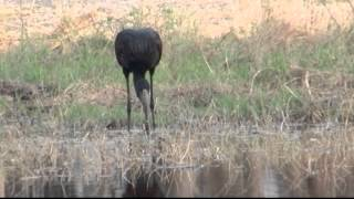 Download Video Birds of Africa 2 MP3 3GP MP4