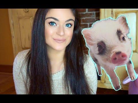 Pet Mini Pig Basic Care