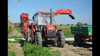 Top lifting harvester ALINA ECO II carrot harvesting model 2018