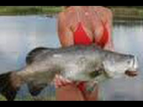 How To Catch Barra On Live Baits.