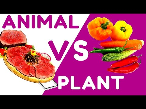 Remarkable Truth About Animal Protein vs Plant Protein