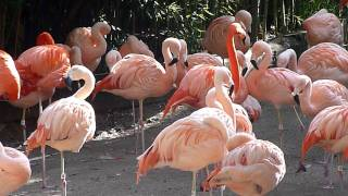 Video PINK FLAMINGOS download MP3, MP4, WEBM, AVI, FLV April 2018