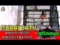 Murai Batu Borneo Bakalan Hutan  Bulanan  Mp3 - Mp4 Download