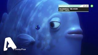 Nemo Alpha 21 00