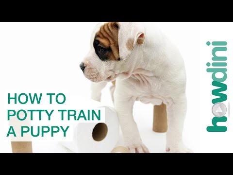 How To Potty Train a Puppy - How to House Train Your Dog