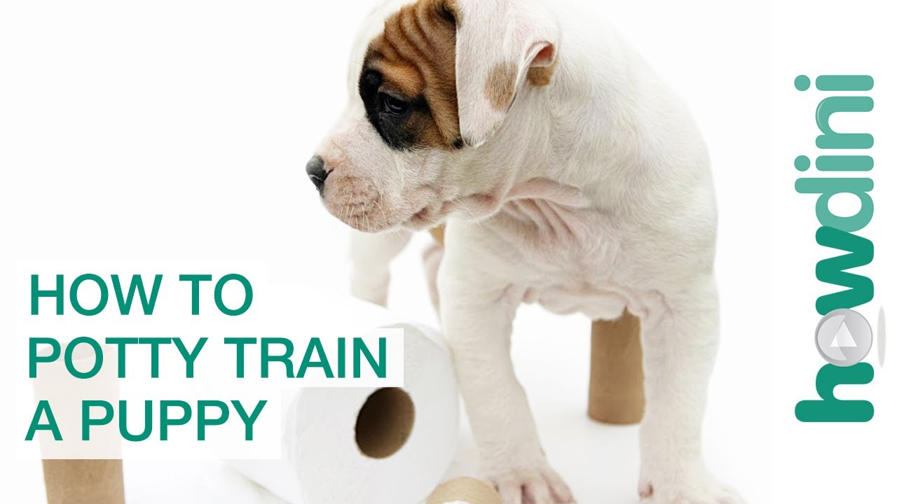 How To Potty Train a Puppy - How to House Train Your Dog - YouTube | How Do You Potty Train A Dog