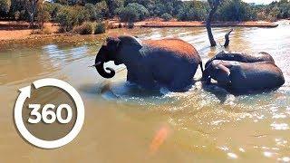 Playful Elephants Swim | Discovery VR (360 video) thumbnail