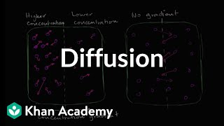 Diffusion | Membranes and transport | Biology | Khan Academy