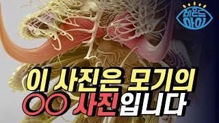 [X파일] 꽃게의 집게발 같은 이것의 정체는?  / Y…