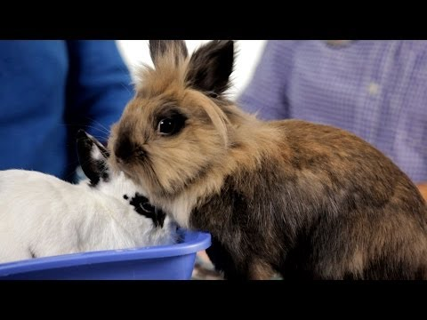 Why It's Dangerous to Keep Rabbit Outside | Pet Rabbits