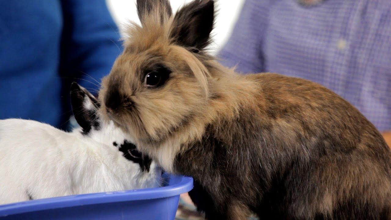 why it s dangerous to keep rabbit outside pet rabbits [ 1280 x 720 Pixel ]