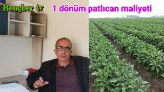 10 dönüm patlıcan maliyeti karı zararı tonajı verimi para kazanmak için size tavsiyelerim