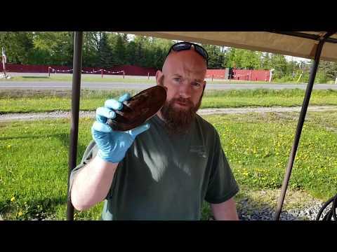Non-Boil Razor Clam Cleaning